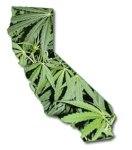 1278543860-marijuana-california[1]